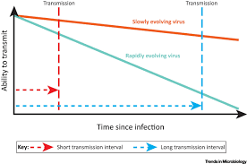 short sighted virus evolution and a germline hypothesis for