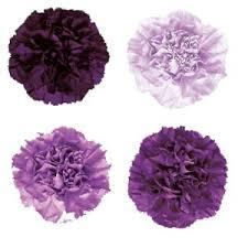 purple carnations purple carnation flowers mixed purple carnations carnation and