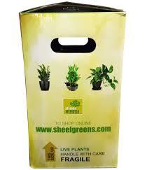 sheel greens artistic pepromia watermelon indoor plant buy sheel