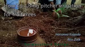how make self watering pots morag gamble our permaculture permaculture diy using clay pot pitcher for fruit tree planting