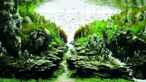 japanese aquarium 100 japanese aquarium aquariums colossal what u0027s your