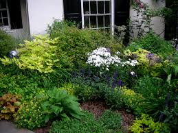 native plant landscaping in new england perennial shade gardens june gbbd baby it u0027s outside carolyn u0027s shade gardens