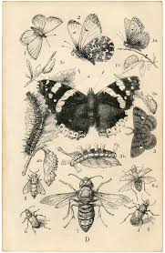 antique british insects print the graphics fairy