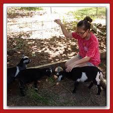 hall family farm hall family farm