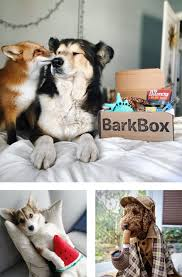 dog toys treats u0026 gifts every month barkbox