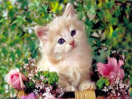 cute background wallpaper for computer cute kitten wallpaper desktop related keywords u0026 suggestions