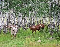 dickinson cattle co llc u003e home u003e texas longhorn celebrity