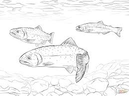 greenback cutthroat trout coloring page free printable coloring