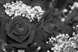 black roses what do black roses symbolize hunker