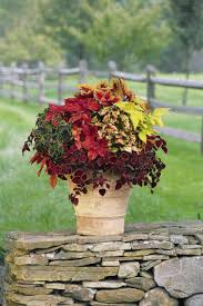 container garden picture gallery gardens planters and fall