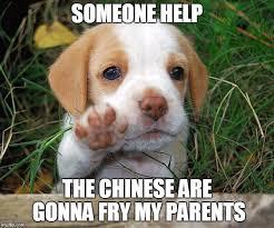 Meme Maker Fry - dog puppy bye meme generator imgflip