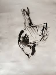 emily waterston observational drawings birds