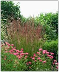 say hello to ornamental grasses gardening