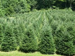 tis the season to plant live trees or not treemendous