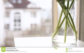 minimalistic indoor scene flowers being put into the vase on the