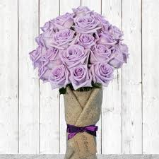 lavender roses majestic 12 or 24 lavender roses 1 800 blooming