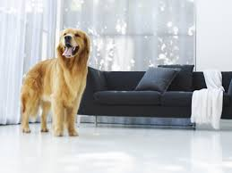 rich dog wallpaper dogs animals wallpapers in jpg format for free
