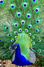 outstanding reverent beauty ツ your favourite wildlife only