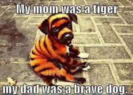 Puppy Meme - my mom was a tiger my dad was a brave dog funny animal puppy meme