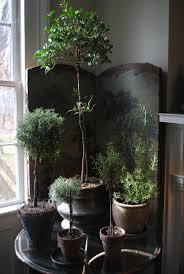 Indoor Flowers 147 Best Indoor Plants Houseplants Images On Pinterest Indoor