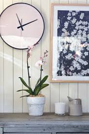 decorating with plants on the urban list