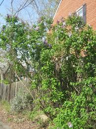 parkfairfax native plant sale approaching the crest april 2011