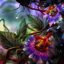 exotic flower wallpaper wallpapers browse