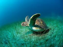 iogp sound u0026 marine hearing capabilities of loggerhead sea turtles
