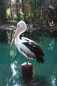 best 25 australian birds ideas on pinterest pretty birds