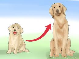 How to Get Your Dog to Jump Poles with wikiHow