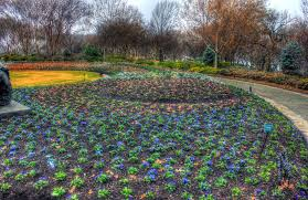 file gfp texas dallas arboretum flower bed jpg wikimedia commons