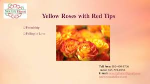 yellow roses with tips june national month
