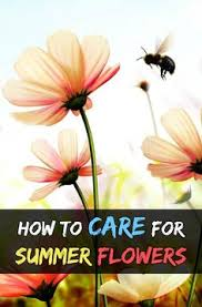 Gardening Tips For Summer - basket column kit for large pots my favorite things gardening
