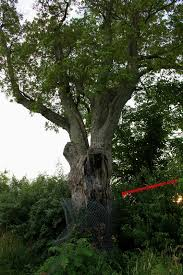 s tree new jersey why so evil places on the planet you
