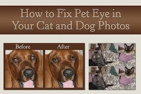 how to fix pet eye in your photos