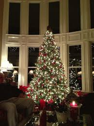 beautiful twinkling lights tree pictures photos and
