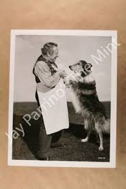 australian shepherd kc details about vintage press photo champion dog show australian