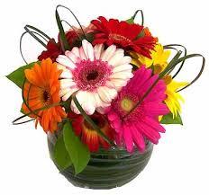 gerbera daisies gerbera bowl