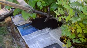 easy organic weed control with newspaper u0026 mulch anoregoncottage