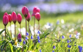 spring background free download wallpaper wiki