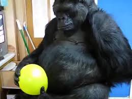 gorilla balloon balloon gorilla gifs search create discover and awesome