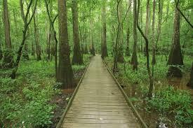 South Carolina national parks images Congaree national park south carolina flickr jpg