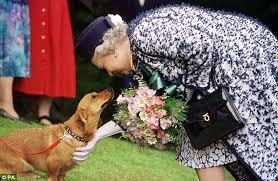 Queen Corgis The Queen U0027s Corgis Holly And Willow Could Be The Last For