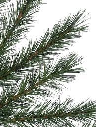 rocky mountain pine artificial tree balsam hill