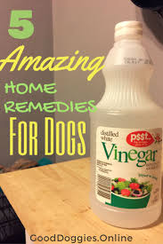 Do All Short Haired Dogs Shed by Best 25 Dog Shedding Remedies Ideas On Pinterest Dog Shedding