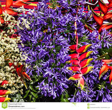 Madeira Flowers - exotic tropical flowers in madeira portugal stock photo image