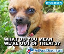 Dog Food Meme - out of dog treats meme from the best dog food company for the