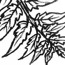 detail of a leaf drawing oil pastel on paper art illustration