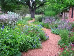 texas native plants landscaping plano prairie garden may 2015