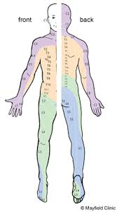 Pictures Of The Anatomy Of The Human Body Spine Anatomy Anatomy Of The Human Spine